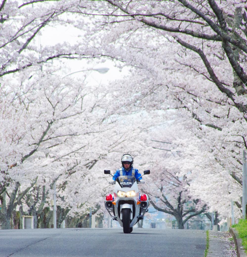安全 運動 春の 交通 2020